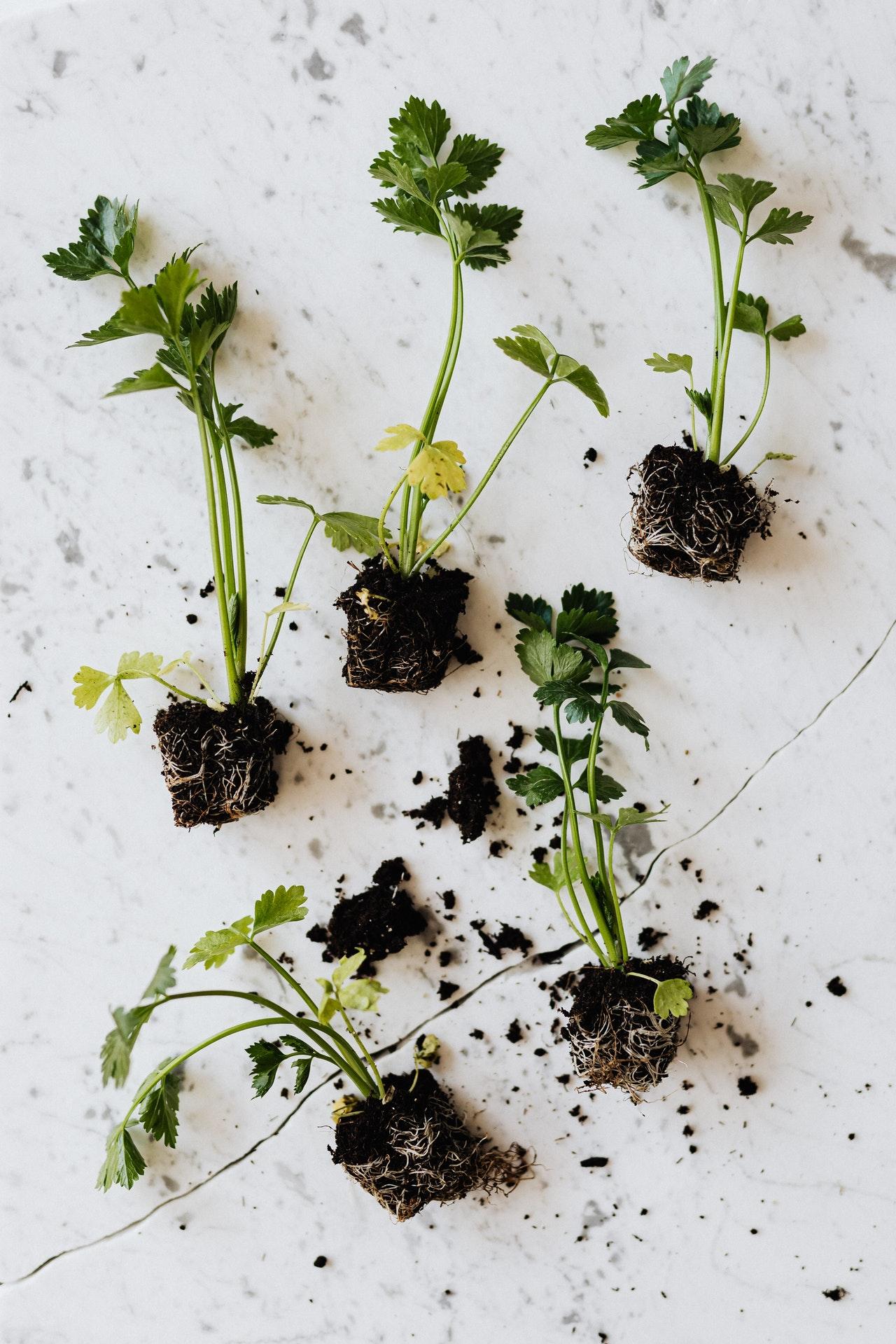 Dyrk dine egne lækre grøntsager i din køkkenhave