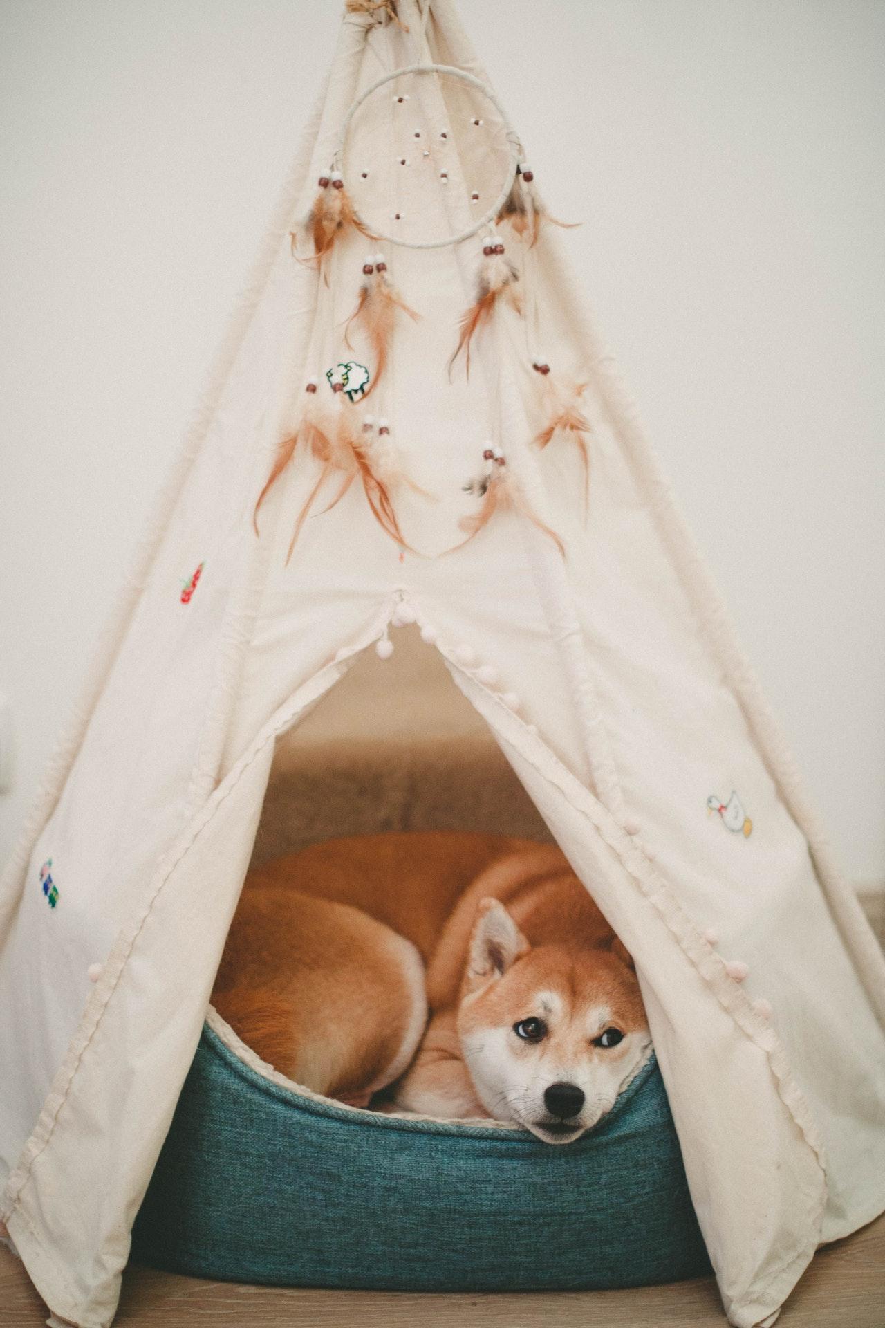 Indret en hyggekrog til hunden i stuen